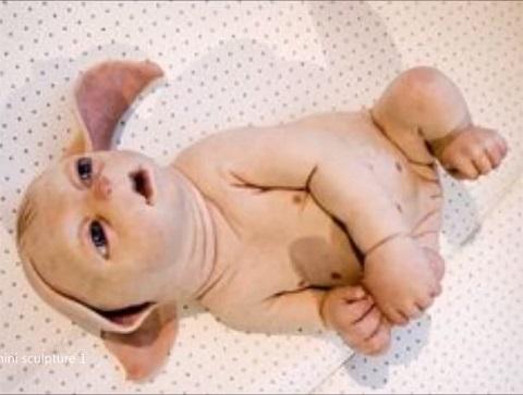 ブタの体内に人間の臓器が!? 動物の体内で人間の臓器を作る「キメラ技術」とは..